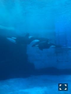 水族館レポ……写真