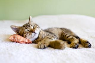 02月22日は…にゃんにゃんにゃん❤で猫の日₍˄·͈༝·͈˄₎◞ ̑̑…だそうで...写真