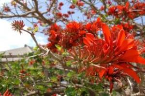 デイゴの花が咲き乱れ -今日は沖縄戦が 終わった日-